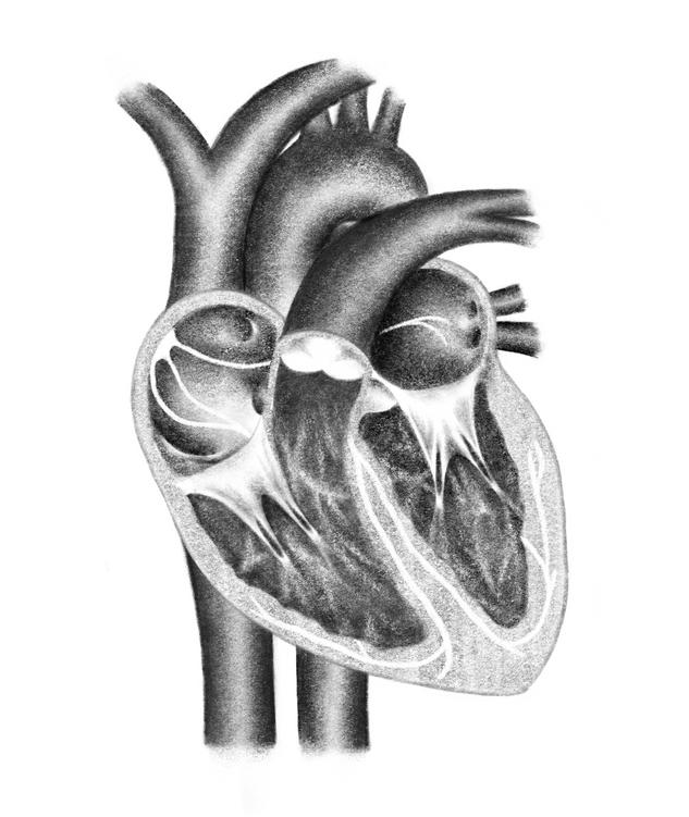 Inside of the Heart Medical Illustration