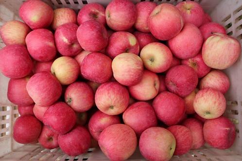 Fuji Apples (5pcs)