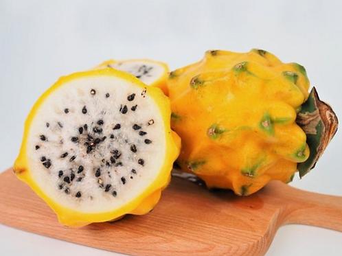 Ecuador Yellow Pitahaya Dragonfruit (2pcs)
