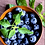 Thumbnail: AfricanBlue Jumbo Blueberries (125g)