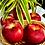 Thumbnail: Envy Apple (2pcs) - NZ/USA