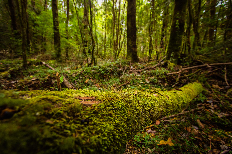 Vegetación bosque húmedo