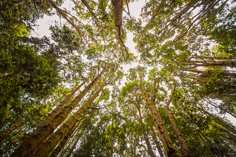 Bosques templados húmedos