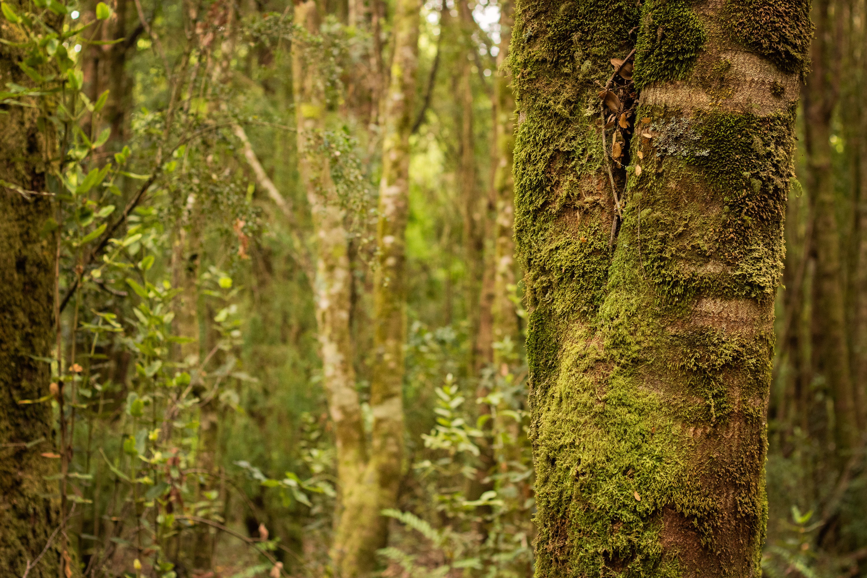 Detalle bosque húmedo