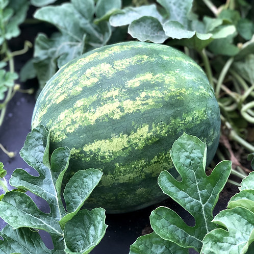 Seedless Watermelon (red or yellow)