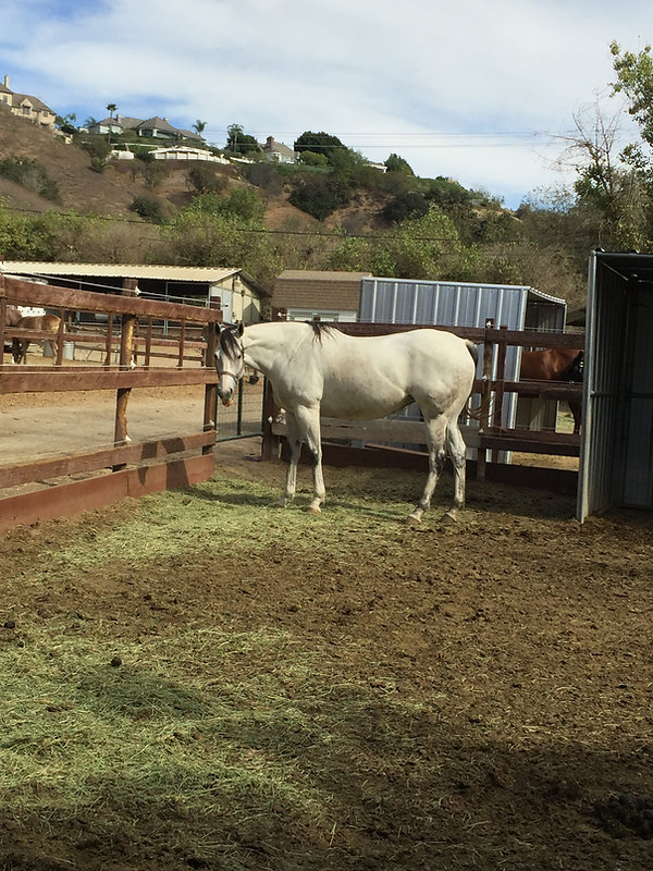 Horsesanddivorces