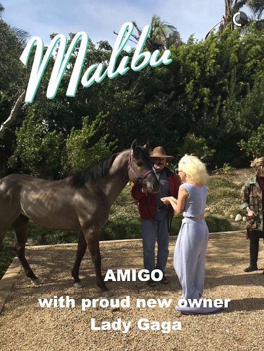 Claytons Blue Amigo and Lady Gaga