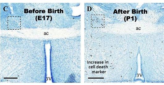 Birth Project.jpg