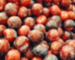 verger-web-prunes-v3.jpg