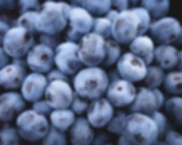 verger-web-bleuets.jpg