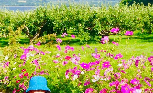 fleurs---verger-en-image.jpg