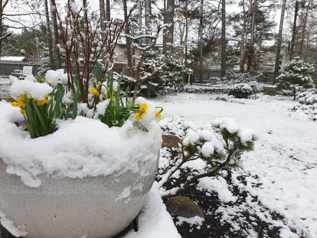 Kevade mitu palet