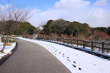 公園の雪景色7088