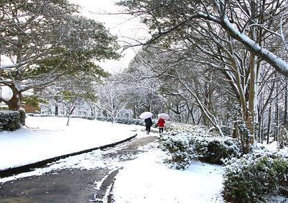 公園の雪景色1486