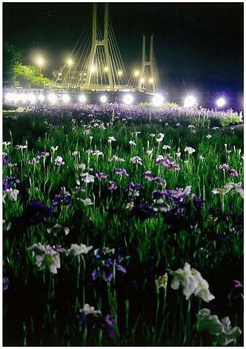 夜の紫明々と