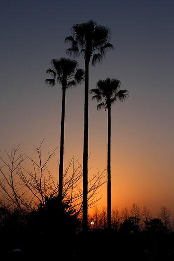 公園の夕日195