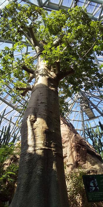 植物館大石