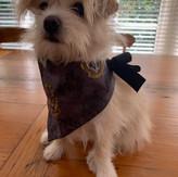 hogwarts Harry Potter print dog bandana.