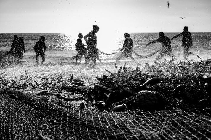 The Fisherman of Fujairah