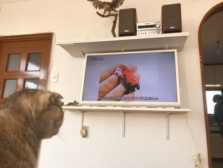 「日曜美術館」にて「七宝焼きアマビエさん」の画像をご紹介頂きました。