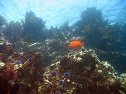 california-2010-6