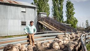 Shearing award remains unchanged