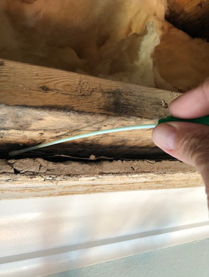 """Swab samples are taken when there is visible mold growth then sent to our lab for identification. This particular swab sample revealed the presence of Stachybotrys the infamous """"Black Mold"""" that was responsible for numerous infant deaths in the Cleveland, Ohio area back in 1994."""