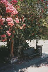 San Gabriel on Film