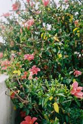 Flowers: Kodak Gold 200