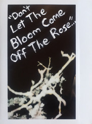 The Bloom...