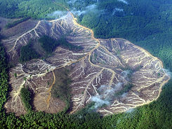 amazon-rainforest-deforestation-wallpaper-2.jpg