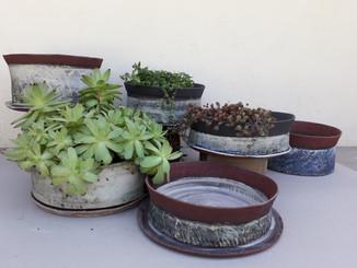 pots bas - succulentes H= de 8cm à 13cm diamètre 29cm