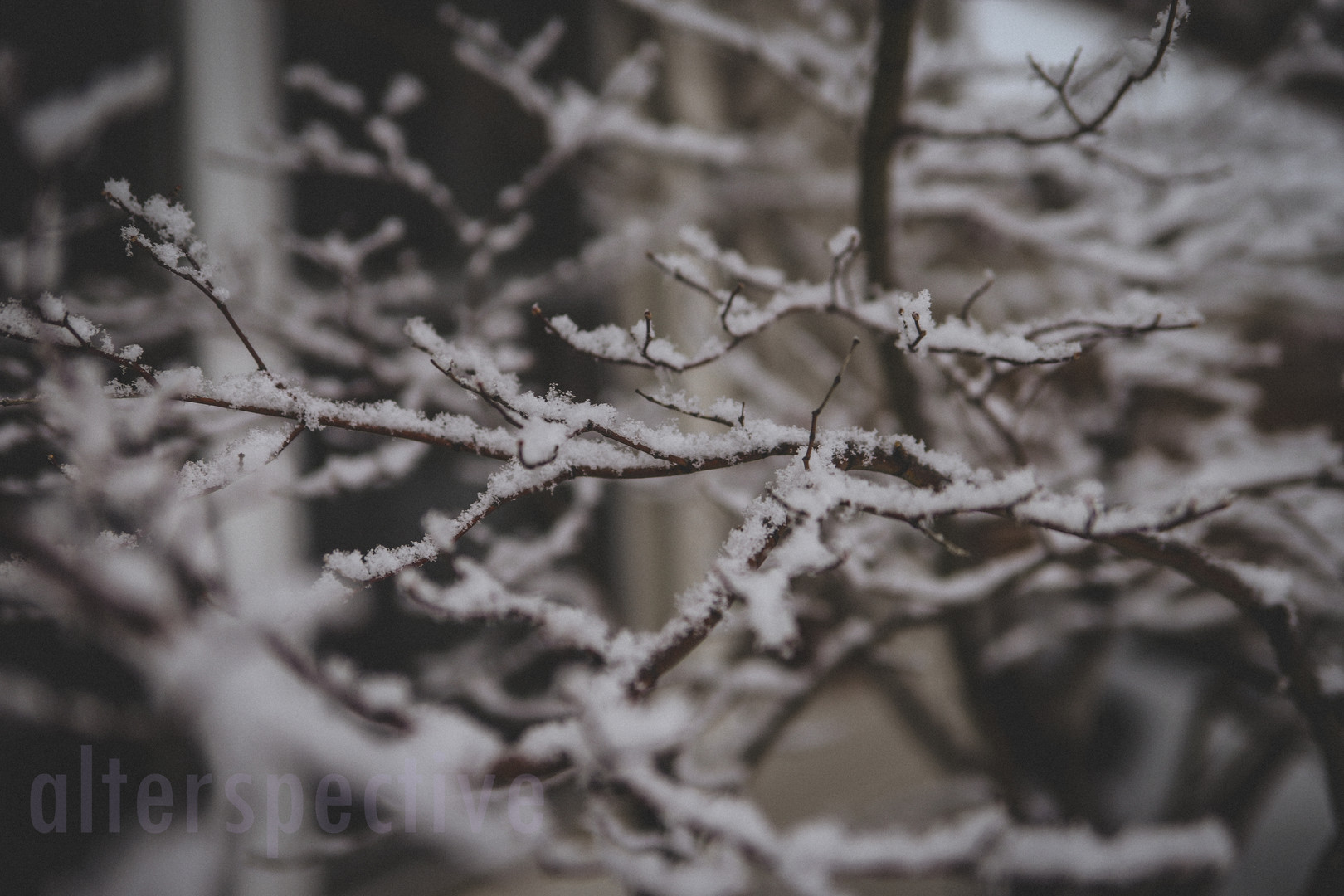 Winter Snow-6.jpg