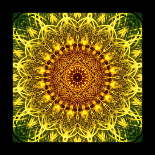 eye of the sunflower web.jpg