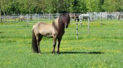 סוס בשוויץ