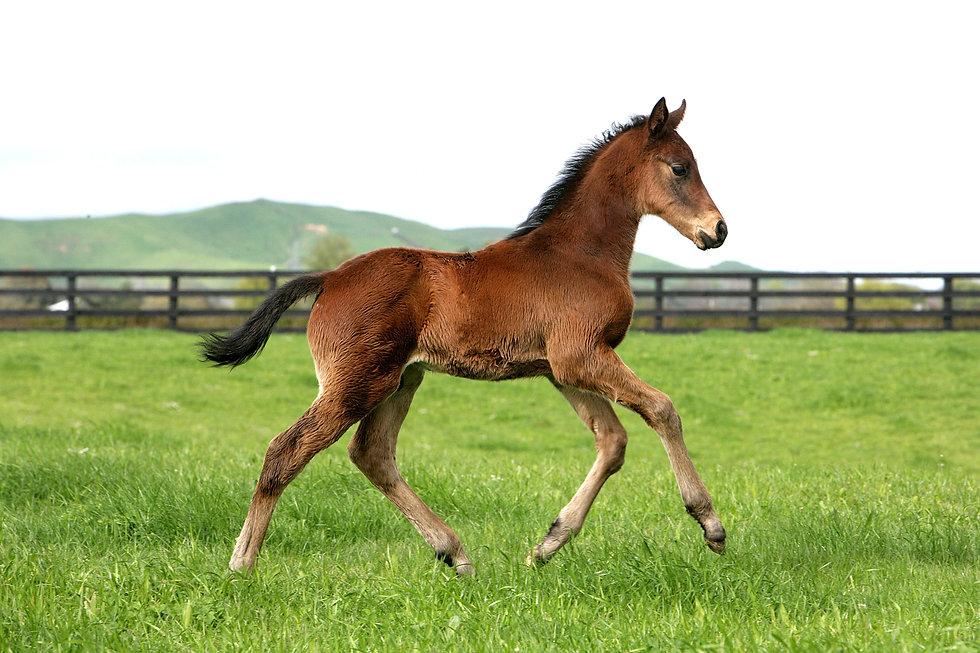 Ace foal shot.jpg