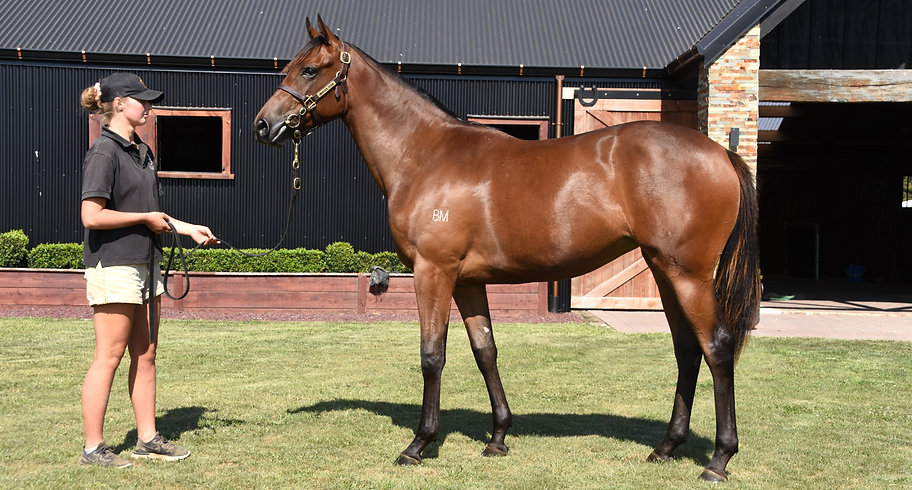 2019 Wrote ex Star Amazing bay filly. Be