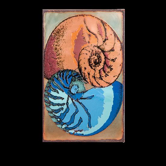 201 - Nautilus