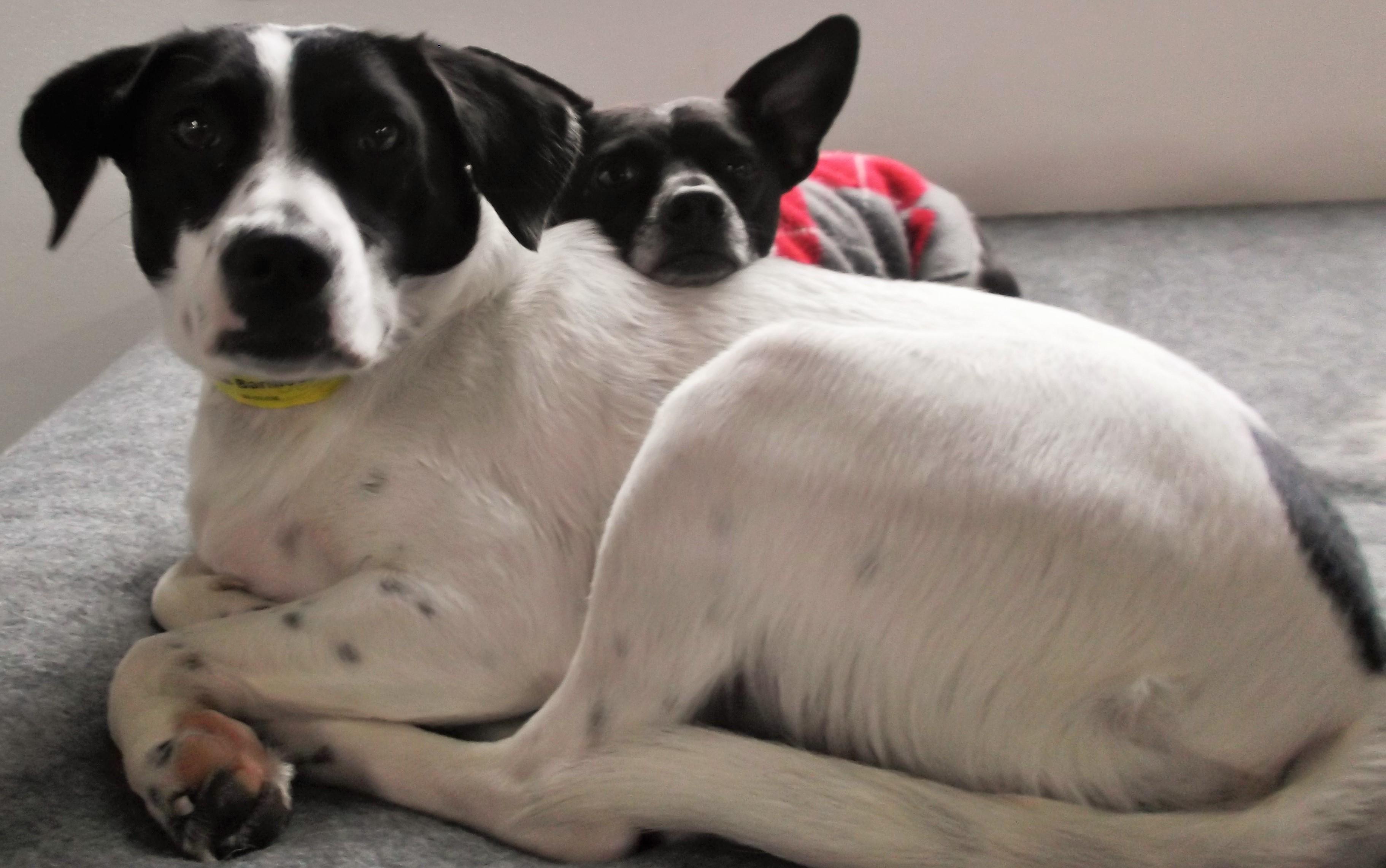Archie & Tess
