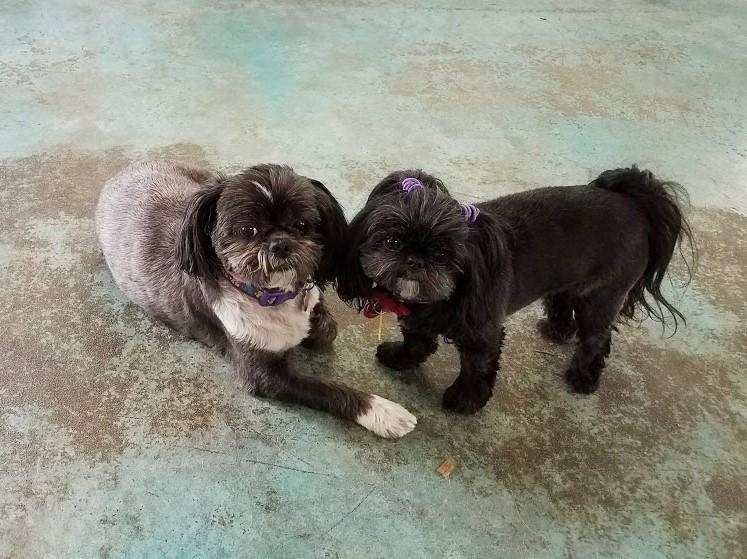 Tia and Trixie
