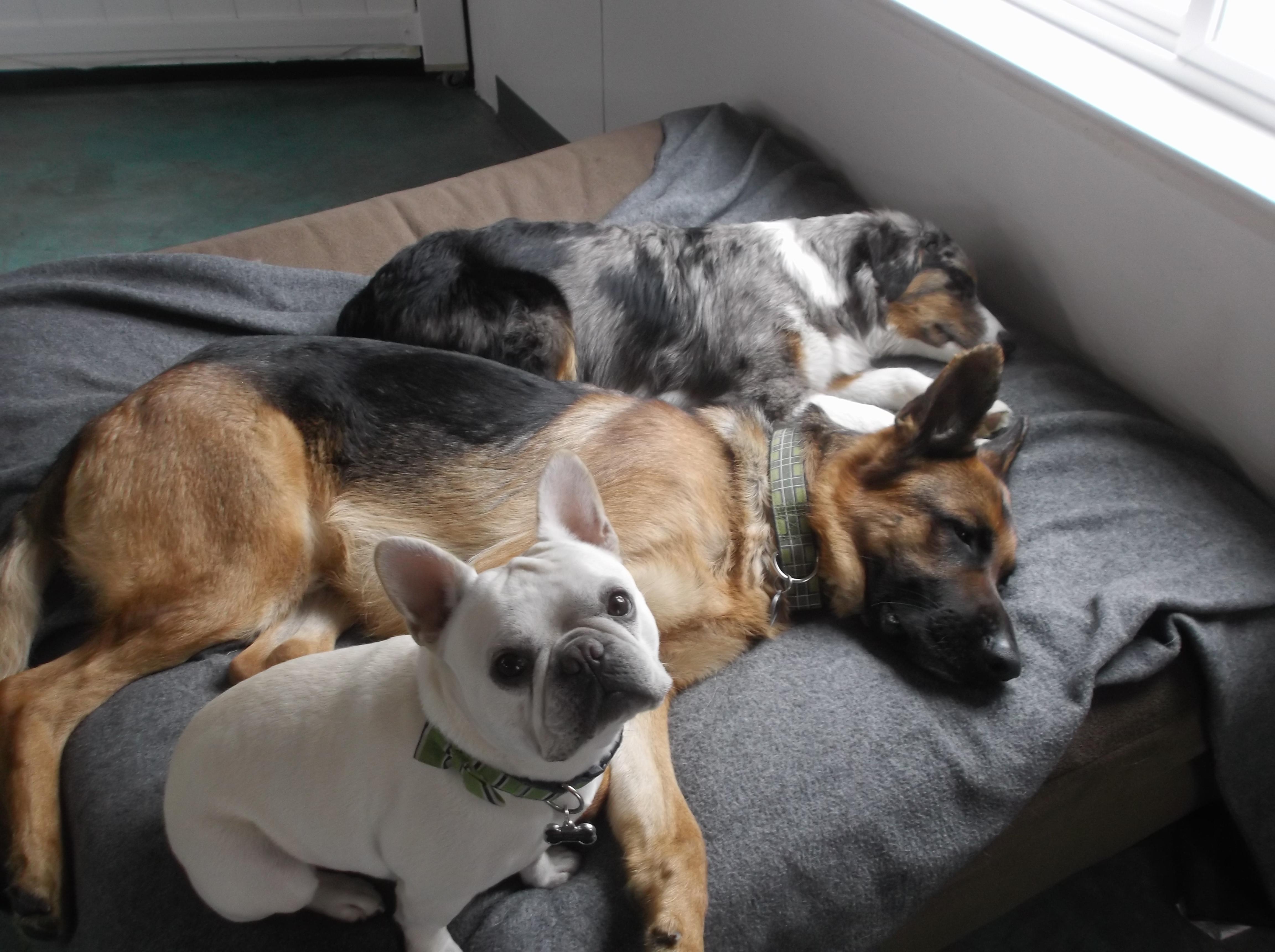 Odin, Dart & Teal'c