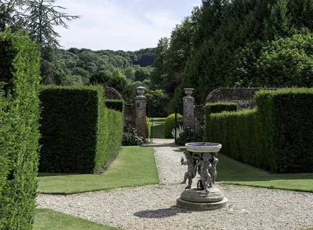 Plant Of The Month - Taxus Baccata - Yew