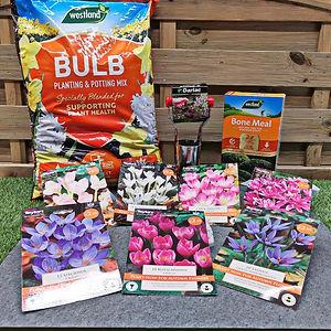 Autumn Bulbs.jpg