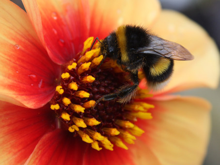 Importance of Bees & Butterflies