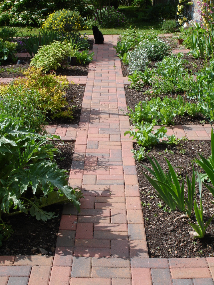 11 vegetable and herb garden in North Curry