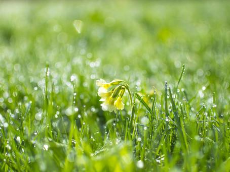 The Magic of the April Garden