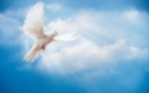 SpiritDove-300x188.png
