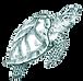 O Projeto Tamar foi criado em 1980 e hoje é reconhecido internacionalmente como uma das mais bem-sucedidas experiências de conservação marinha.
