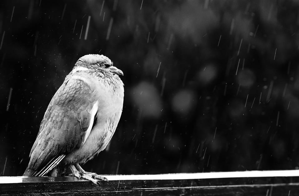 Weathering The Storm_Mark Simpson.jpg