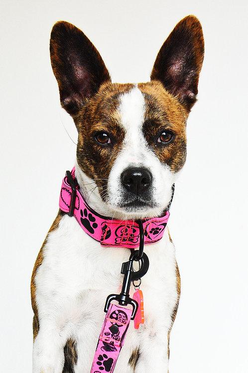 Obojok - neon pink